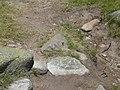 Papallona entre l'estany de Malniu i el Prat Fondal P1300492.jpg