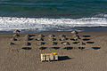 Parasols, morning, Beach, Rincon de la Victoria, Andalusia, Spain.jpg