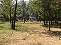 Park Lauta 8.jpg