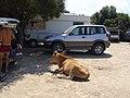 Parking du Désert des Agriates.jpg