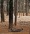 Parque Biológico de Vinhais - Portugal (25875599280).jpg
