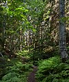 Path to a sunny patch in Gullmarsskogen ravine 1.jpg