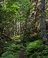 Path to a sunny patch in Gullmarsskogen ravine 1.jpg