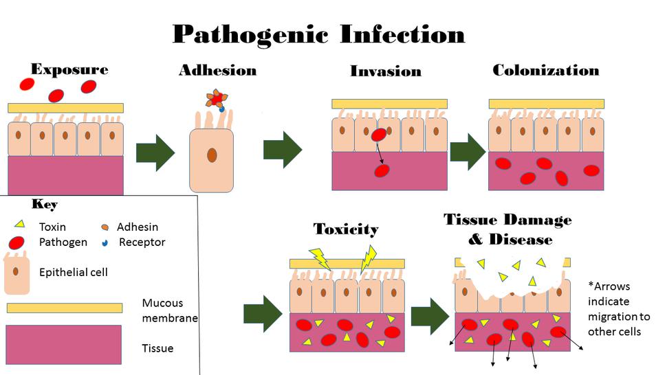 Pathogenic Infection