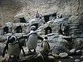 Penguin Playhouse - panoramio.jpg