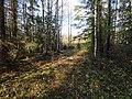 Permskiy r-n, Permskiy kray, Russia - panoramio (1172).jpg