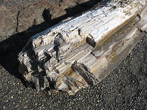 Ginkgo Petrified Forest State Park - Petrified logs at the park interpretive center
