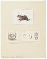 Phyllostoma hastatum - 1700-1880 - Print - Iconographia Zoologica - Special Collections University of Amsterdam - UBA01 IZ20700097.tif