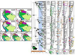 Phylogeography - These figures map out the phylogeographic history of poison frogs in South America.