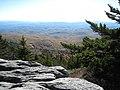 Picea rubens Abies fraseri Grandfather Mountain.jpg