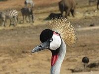 PikiWiki Israel 53078 wildlife animals.jpg