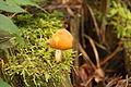 Pilze 2010-09-25-4305.jpg