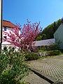 Pirna, Germany - panoramio (2113).jpg