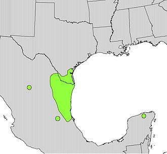 Ebenopsis ebano - Image: Pithecellobium flexicaule range map