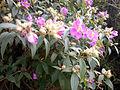 Plant X 002B.jpg