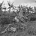 Plantage met bananenbomen, Bestanddeelnr 252-2605.jpg