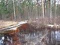 Pludi druvciema 2011 - panoramio (6).jpg