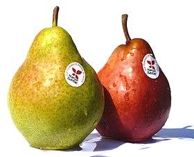 Pommes Et Poires Blanches Decoratif D Interieur En Resine