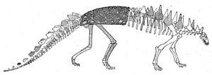 Polacanthus - Historical P. foxii skeletal restoration by Franz Nopcsa von Felső-Szilvás