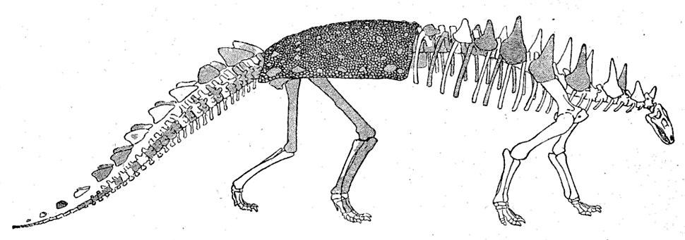 Polacanthus skeleton