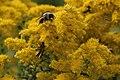 Pollinator hotspot (15330866262).jpg