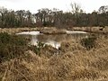 Pond on Chudleigh Knighton Heath - geograph.org.uk - 1173236.jpg