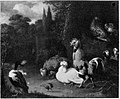 Poultry and Ducks in a Park by a follower of Melchior d'Hondecoeter Rijksdienst voor het Cultureel Erfgoed B1299.jpg