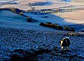 Pound Farm Nether Cerne - geograph.org.uk - 1113185.jpg