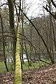 Powalone drzewo - panoramio.jpg