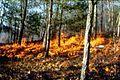 Prescribed fire GWJNF Steven Q Croy USDAFS 1995.jpg