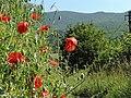 Pri trati - panoramio (1).jpg