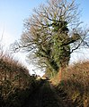 Prior's Loke - geograph.org.uk - 1136976.jpg