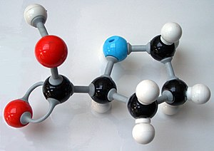 Molecular model -  Fig 3. A modern plastic ball and stick model. The molecule shown is proline.