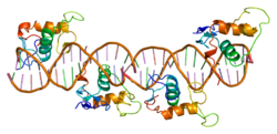 Proteino RxRA PDB 1by4.png