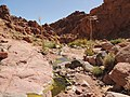 Qesm Saint Katrin, South Sinai Governorate, Egypt - panoramio (16).jpg