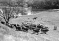 Queensland State Archives 2151 Wivenhoe Crossing Fernvale Upper Brisbane River 1945.png