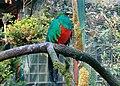 Quetzal (Pharomachrus mocinno).jpg