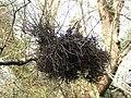 Quidditch debris^ - geograph.org.uk - 383760.jpg