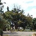 Quinta de São Roque, Funchal - 2012-02-29 - DSC04407 (cropped).jpg