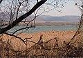 Rákosie pri jazere - panoramio.jpg