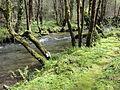 Río Mandeo (Betanzos, A Coruña, Galicia, España) 02.JPG