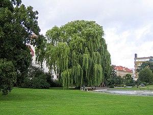 Rörsjöparken - Image: Rörsjöparken, Malmö