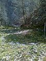 Rečni ekosistem v zgornjem delu reke Idrijce.jpeg