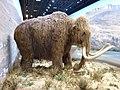 Reconstitution d'un mammouth 1.jpg