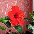 Red Flower 5.jpg