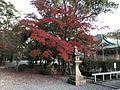 Red leaves in Sumiyoshi Shrine.jpg