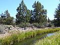 Redmond-Bend Juniper State Scenic Corridor, Oregon.JPG