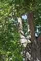 Reimlingen Linde auf Flur Nr. 90 012.jpg