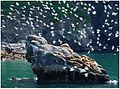Resurrection Bay Seagulls.jpg