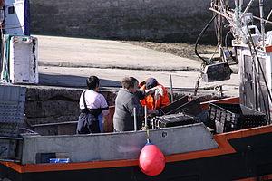 Retour de la pêche à la seiche du fileyeur Jason IV (47).JPG